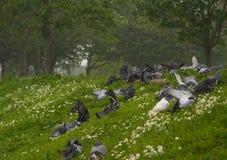 Pigeons abritant d'une rafale Photos stock