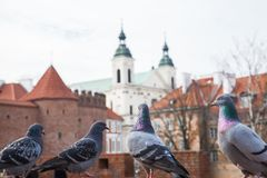 Pigeons against of the Barbican fortress in the historic center of Warsaw. Poland stock photography