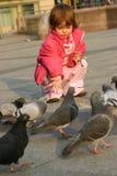Pigeons alimentants Photo libre de droits