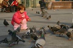 Pigeons alimentants Photographie stock libre de droits