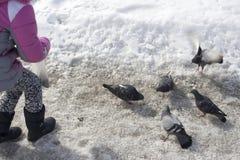 Pigeons alimentants de fille Photographie stock libre de droits
