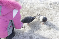 Pigeons alimentants de fille Photo stock