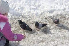 Pigeons alimentants de fille Images stock