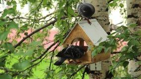 Pigeons around bird feeders stock video
