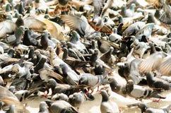 Pigeons attendant l'alimentation des personnes Photo stock