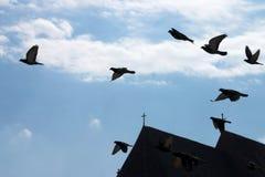 Pigeons au-dessus du ciel Images stock