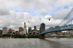 Pigeons au-dessus du fleuve Image libre de droits