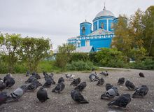 Pigeons on the background of the blue church in the autumn, in cloudy weather. ACHINSK, RF - September: The main temple of Achinsk. The Orthodox Church of the Royalty Free Stock Photos