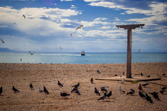 Pigeons at the beach Royalty Free Stock Images