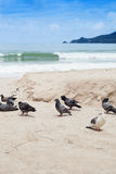 Pigeons at the beach Royalty Free Stock Photo