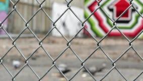 Pigeons birds feeding fence urban. Video of pigeons birds feeding fence urban stock video footage