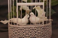 Pigeons blancs dans l'amour dans une cage Photos libres de droits