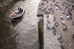 Pigeons and boat in amsterdam canal Stock Photos
