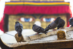 Pigeons and Boudhanath stupa in background - symbol of Nepal. Travel. Royalty Free Stock Images