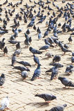 Pigeons at Boudhanath Temple, Kathmandu, Nepal Royalty Free Stock Photos