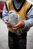 Pigeons in a boys hand Royalty Free Stock Images