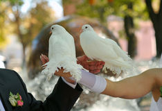 Pigeons and the bride and groom Royalty Free Stock Photography