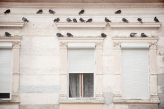 Pigeons on a building facade Stock Photography