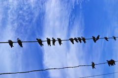 Pigeons on a cable Stock Photography