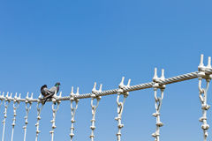 Pigeons on cable of the bridge Stock Photo