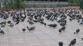 Pigeons in Casablanca, Morocco Royalty Free Stock Photos