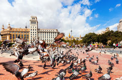 Pigeons at Catalonia Square Royalty Free Stock Photography