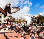 Pigeons at Catalonia Square in Barcelona, Spain Stock Photo