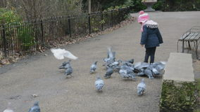 Pigeons chasing little girl in the park Stock Images