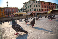 Pigeons in a city Royalty Free Stock Images