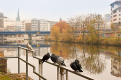 Pigeons and city Stock Images
