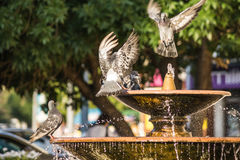 Pigeons in the city fountain Royalty Free Stock Images