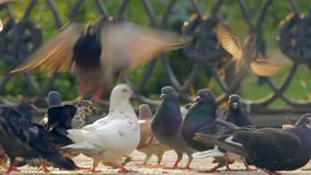 Pigeons in the city parke stock video footage
