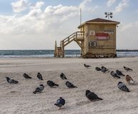 Pigeons and a Closed Lifeguard Shack on a Deserted Beach stock images