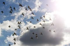 Pigeons on cloudy sky with the sun shine Stock Photography