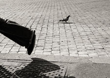 Pigeons on cobblestone pavement in Rome, black and white Stock Photography