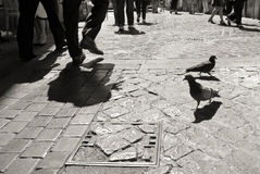 Pigeons on cobblestone pavement in Rome, black and white Stock Image