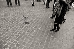 Pigeons on cobblestone pavement in Rome, black and white Stock Images