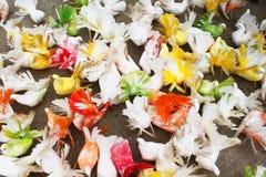 Pigeons colorés Photo libre de droits