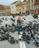 Pigeons in The Council Square Stock Image