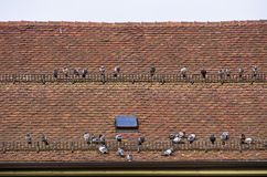 Pigeons Crowd A Roof Royalty Free Stock Images