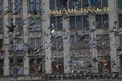 Pigeons. On Dam Square, Amsterdam, Netherlands Royalty Free Stock Image