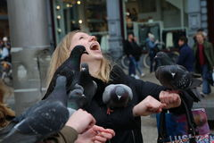 Pigeons. On Dam Square, Amsterdam, Netherlands Stock Photo