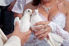 Pigeons dans des mains du marié et de la mariée Images libres de droits