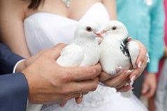Pigeons dans des mains du marié et de la mariée Photos stock