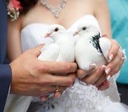 Pigeons dans des mains du marié et de la mariée Photographie stock libre de droits