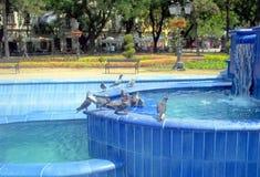 Pigeons dans la fontaine Images stock