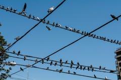 Pigeons dans la ville Photographie stock