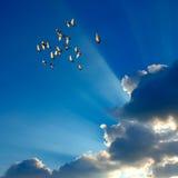 Pigeons dans le ciel Photo libre de droits