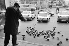Pigeons de alimentation de vieil homme Photos libres de droits