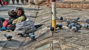 Pigeons de alimentation de femme sans abri image stock